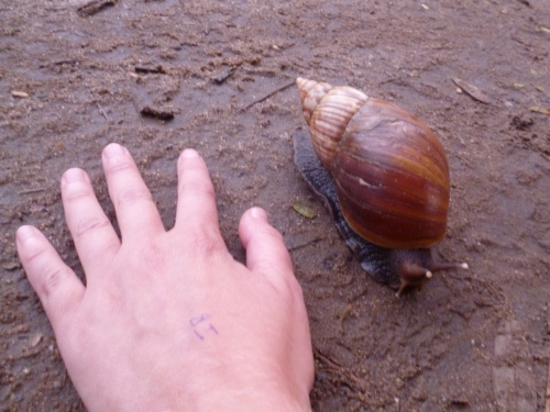 Just seemed that everything was bigger in Africa (my hand is there for scale).