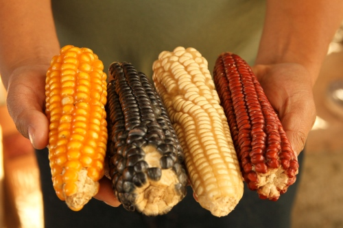 Colorful Corn in Zanacantán
