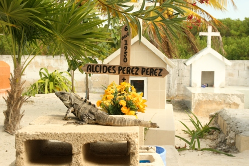 Animal life on the island - in the Holbox cemetary
